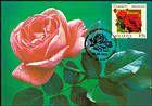 № 805 MC5 - Rose