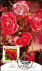 № 805 MC6 - Roses 2012