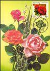 № 805 MC7 - Roses
