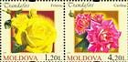 № 806+808Zd - Roses 2012