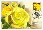 № 806 MC1 - Freisia Rose