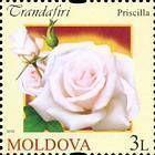 № 807 (3.00 Lei) Priscilla Rose