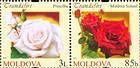 № 807+805Zd - Roses 2012