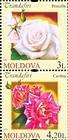 № 807+808Zd - Roses 2012