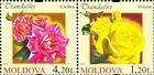 № 808+806Zd - Roses 2012