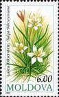 № 81 (0.06 Lei) Bieberstein Tulip