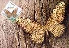 № 838 MC - Butterflies and Moths (III) 2013