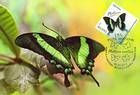 № 839 MC - Papilio Blumei (Peacock or Green Swallotail Butterfly)