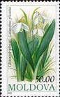 Galanthus Snowdrop