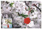 № 946 MC4 - Traditional «Mărţişor» Talisman and Cherry Blossoms