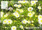 № 952 MC1 - Flora: Wild Flowers 2016