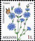 № 953 (1.00 Lei) Chicory (Cichorium Intybus)
