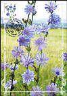 № 953 MC1 - Flora: Wild Flowers 2016