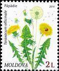 № 954 (2.00 Lei) Dandelion (Taraxacum officinale)