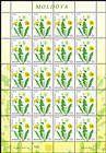 № 954 Kb - Flora: Wild Flowers 2016
