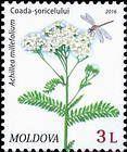 № 955 (3.00 Lei) Yarow (Achillea Millefolium)