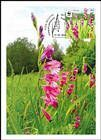 № 958 MC1 - WWF - Protected Flora: Turkish Marsh Gladiolus (Gladiolus Imbricatus) 2016