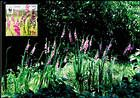 № 958 MC2 - WWF - Protected Flora: Turkish Marsh Gladiolus (Gladiolus Imbricatus) 2016