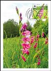 № 959a MC1 - Turkish Marsh Gladiolus (Gladiolus Imbricatus)
