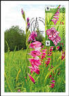 № 959b-961Zd MC - Turkish Marsh Gladiolus (Gladiolus Imbricatus)