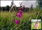 № 959b MC2 - WWF - Protected Flora: Turkish Marsh Gladiolus (Gladiolus Imbricatus) 2016