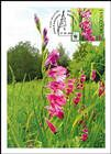 № 960 MC1 - Turkish Marsh Gladiolus (Gladiolus Imbricatus)