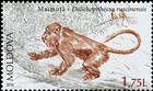 Monkey (Dolichopithecus Ruscinenis)
