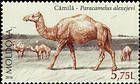 Camel (Paracamelus Alexejevi)
